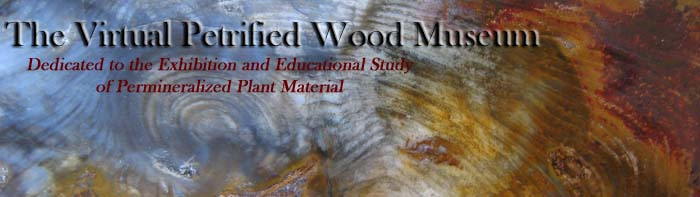The Virtual Petrified Wood Museum.  Dedicated to the Exhibition and Educational Study of Permineralized Plant Material